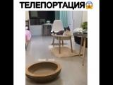 А у вашего кота есть такая способность?