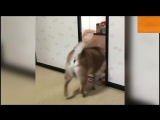 собака кидает миску для еды