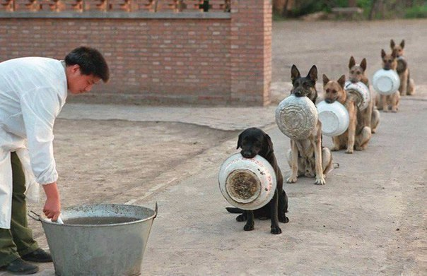 Полицейские собаки в китае