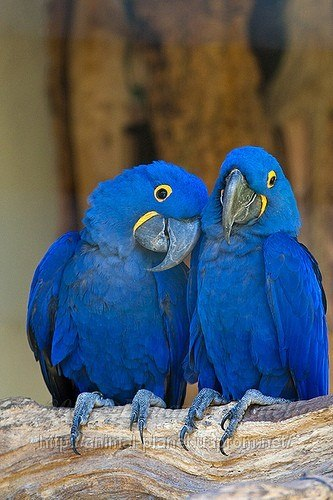 картинки птицы ары