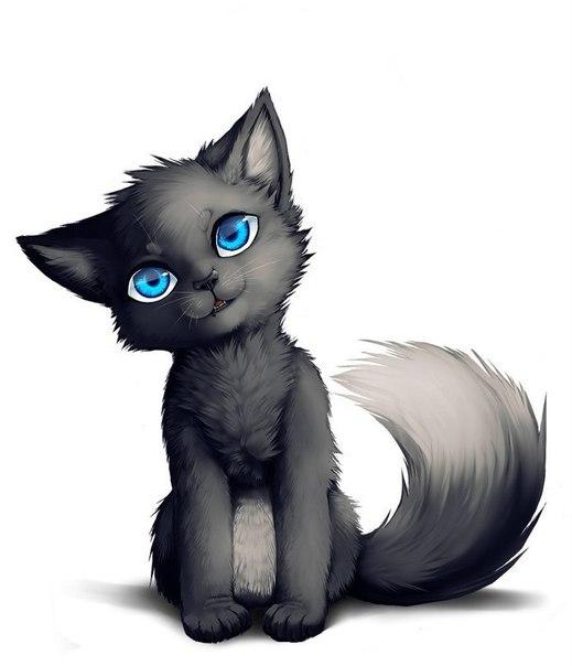 Коты воители картинки самые красивые - aa5c1
