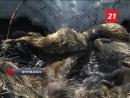 Мурманские ветеринары выяснили, каким способом убили 16 бродячих собак