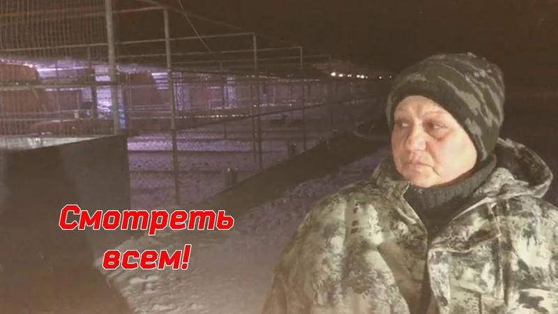 Миллион просмотров и миллион рублей цена жизни тысячи собак! The price of life for 1000 dogs!