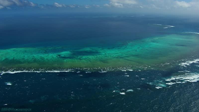 BBC «Большой Барьерный риф (2). От рифа до тропического леса» (Познавательный, природа, животные, 2012)