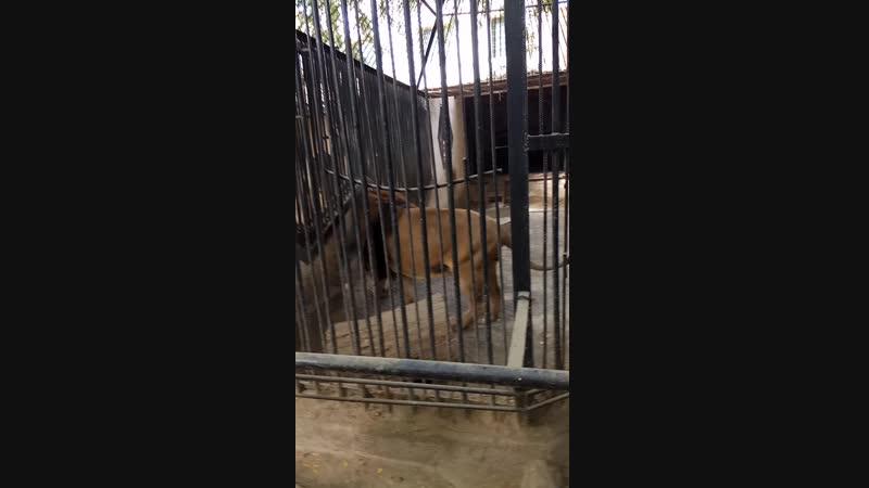 зоопарк Одесса