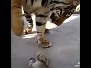 Big and small cat