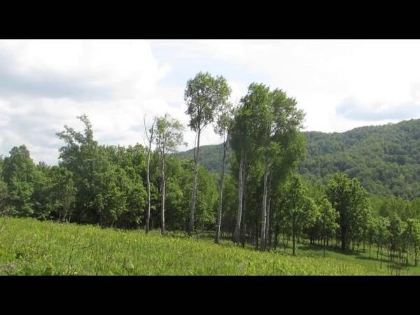 Узуновы поляны район Горячего Ключа