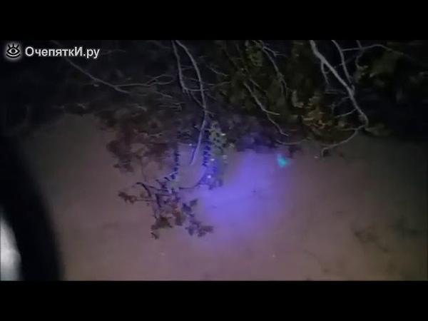 Обнаруживаем скорпиона в песке