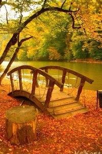 Отцвели цветы, падают листья, птицы молчат, лес пустеет и затихает.ОСЕНЬ. - Страница 6 A9ElVh79pOk