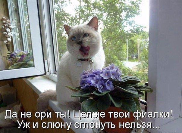 коты и цветы AW2GLjJBZ9Y