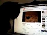 Очень смешное видео - реакция кота