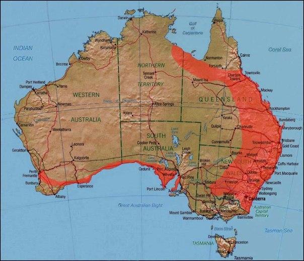 Ареал обитания: в восточной Австралии (за исключением крайнего севера и юга), южной Южной Австралии и Западной Австралии