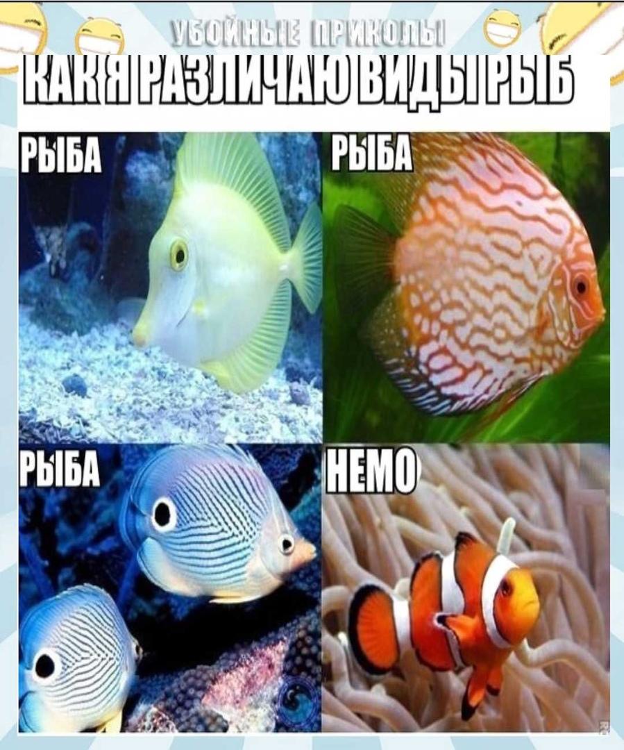 Только так и различаю рыб.