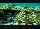 Мексиканские кораллы. Сентябрь 2018.