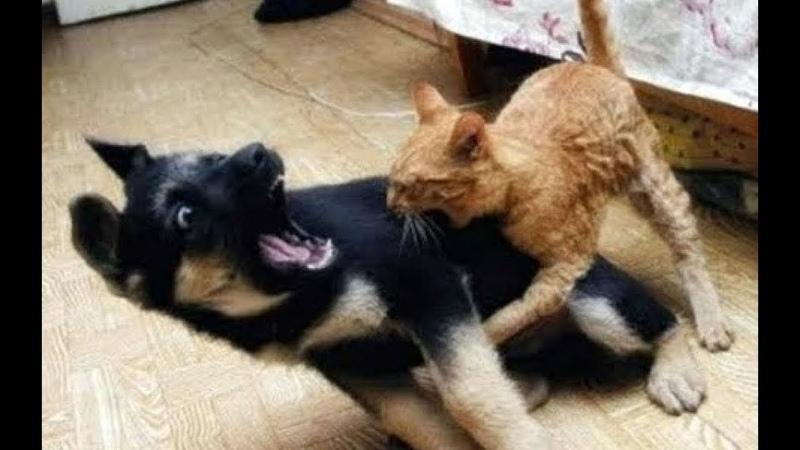 NINJA CATS vs DOGS - Who Wins