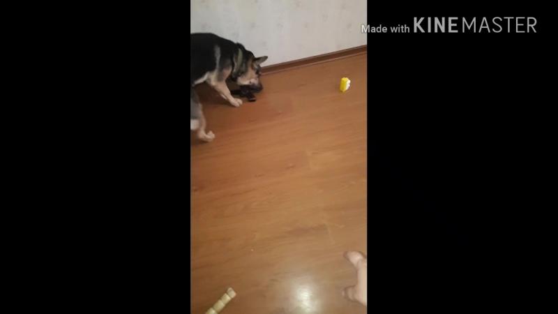 Крохотун помогает убирать игрушки, ну и побаловаться не забыл