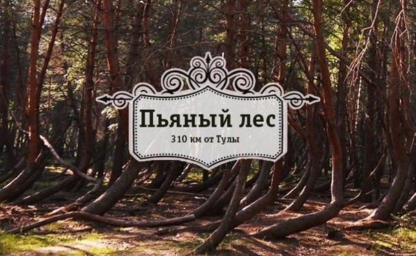 Пьяный лес в Рязанской области Не Бермудский треугольник, конечно, и даже не Синюшкин колодец, но место, плотно обросшее легендами и не дающее покоя учёным, колдунам и праздным туристам.На