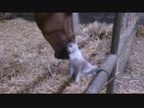 Лошадь с котом лучшие друзья. Видео прикол