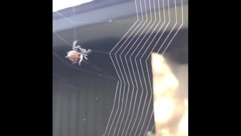 Паучок плетёт паутину