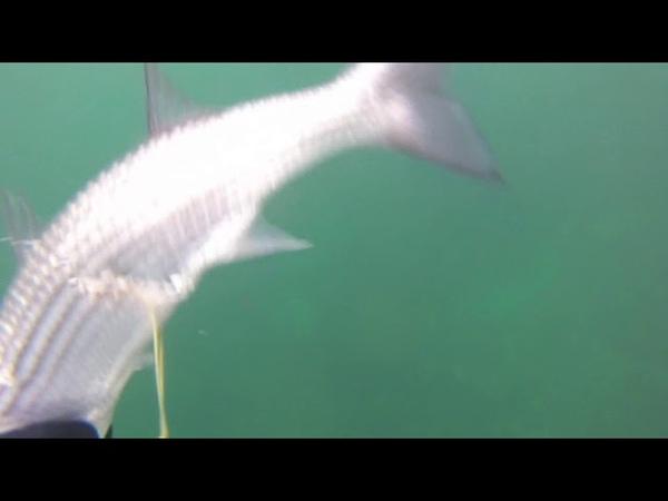 95км шторм!. 05.11.2018г Подводная охота. Каспийское море Актау,