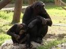 В мире животных Приматы
