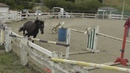Free Jumping Horses: Catero