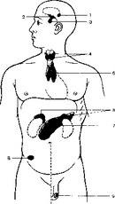 4-щитовидная и паращитовидная...  Эмбриологически эндокринные железы оказываются различного происхождения.
