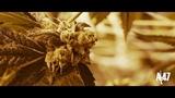 King Lil G FT Gera Mx - En La Cuadra (Official Music Video)