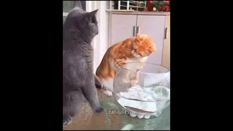 NOOO Carl don't… The fish is our friend not food for cat ""