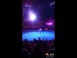 старинный циркъ Пилигримъ