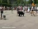 В Ельце прошла третья выставка собак, приуроченная к всемирному дню верных друзе