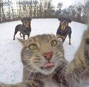 Подборка фотографий крутого сэлфи-кота