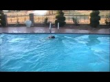 Dog Jumps Off High Dive into Pool!!!