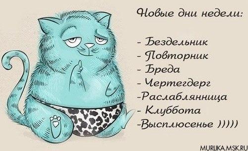 Кошачьи дни недели