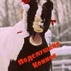 Подслушано Конное [Архангельская область ]
