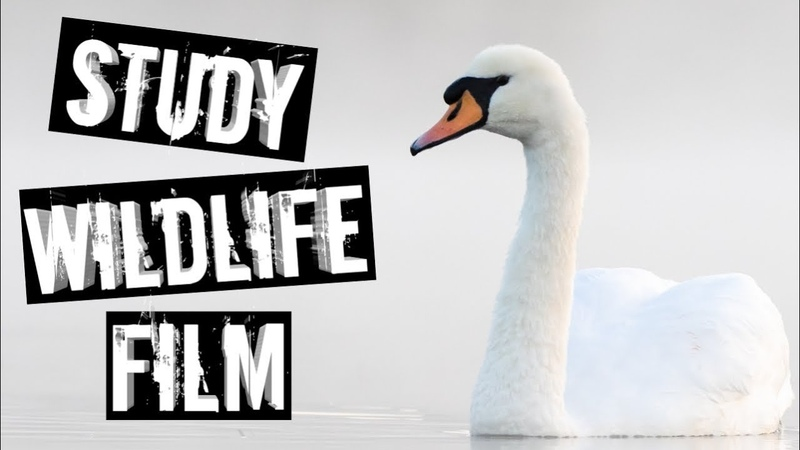 Becoming A Wildlife Filmmaker Part Two: Media City UK