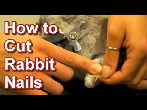 How to Cut Rabbit Nails - Tai Wai Small Animal Exotic Veterinary Hospital