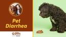 Диарея у домашних животных Pet Diarrhea