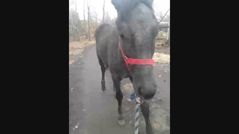 прогулка с лошадью 🐴