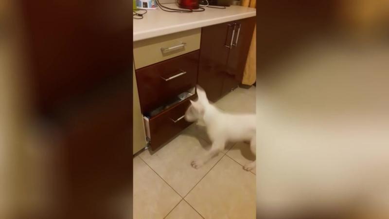 Бультерьер не дал кошке побыть в одиночестве)