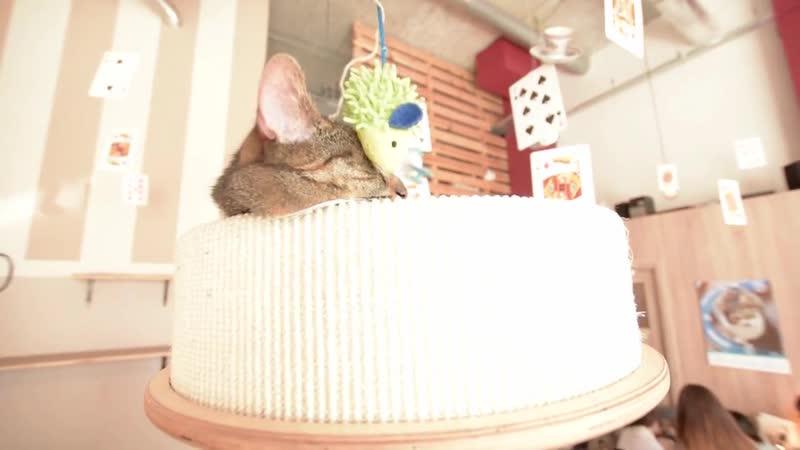 Lazarski Guide- Na Paluchu - animal shelter, Miau Cafe