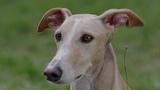 Самокритика буржуазного пса (Комедия Германия 16+ в кино с 15 июня 2017)