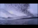 Птицы Стаи птиц в полете Чудеса природы