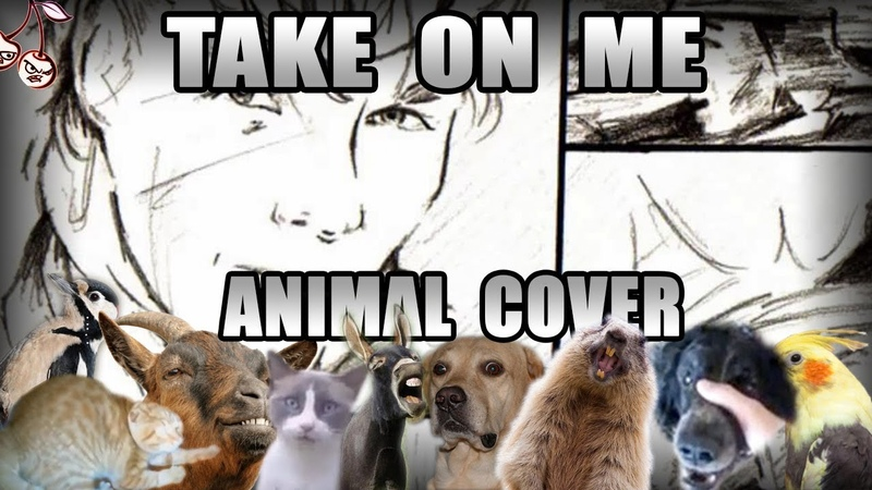 A-ha - Take On Meow (Animal Cover)