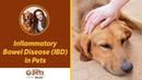 Воспалительные заболевания кишечника у домашних животных Inflammatory Bowel Disease IBD in Pets