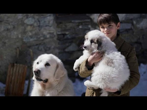 Белль и Себастьян: Друзья навек (2017) Дублированный трейлер HD