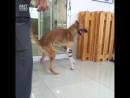 Собачка получила новую жизнь благодаря протезам