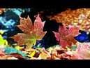 Пьеса Cагариха 下がりはの曲 Опадающие листья Александр Ивашин сякухати