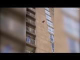 Daredevil raccoon bravely scales Ocean City building