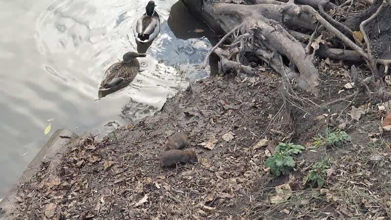 MVI_1181 Жизнь других на реке Темерник.